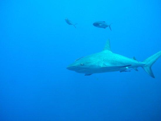 Belize Diving Adventures: More sharks
