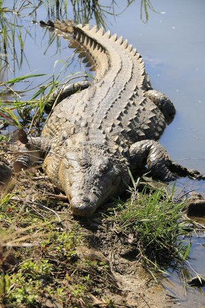 Sabi River Sun Resort: Guest at the hippo pool