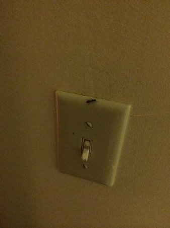 Great Lakes Inn & Suites: Ant on light switch