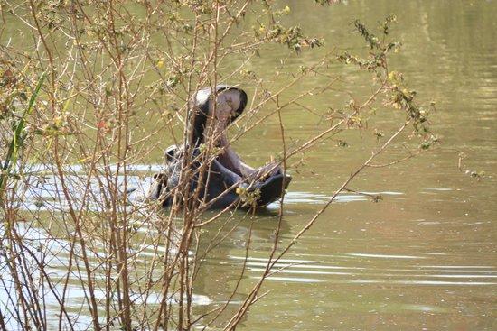Sabi River Sun Resort: The hippo pool