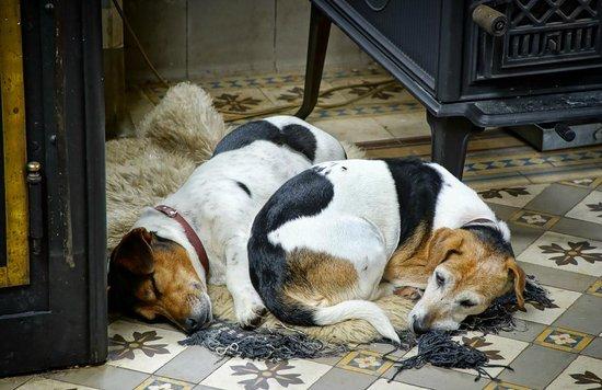 les chiens dans la cuisine picture of chateau de vaulx saint julien de civry tripadvisor. Black Bedroom Furniture Sets. Home Design Ideas