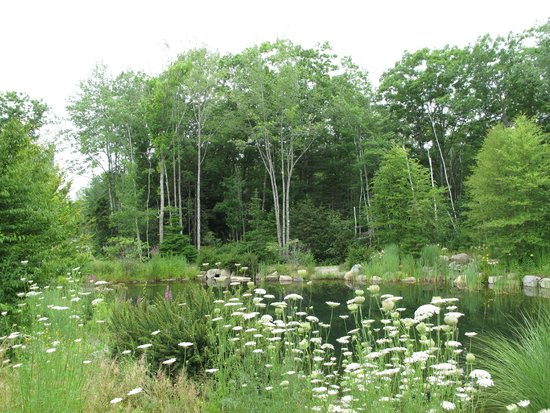 Hidden Pond Behind Earth