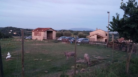 The animals and small barn on the left for social evenings and nights. Behind the cars is the fa