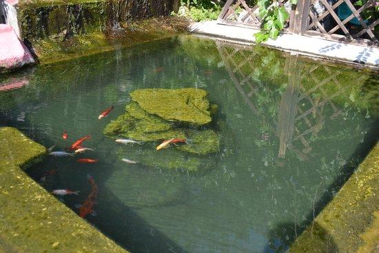 Villa Ridente Club: Прудик с рыбками на территории отеля