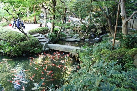 Happoen Garden : карпы