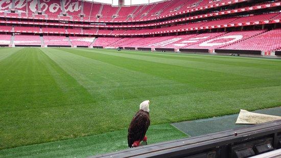 Estadio do Sport Lisboa e Benfica: Con el Águila