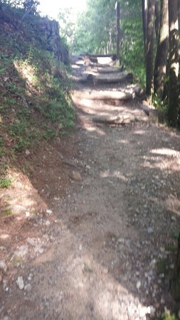 Vogel State Park: Trail by the entrance/exit
