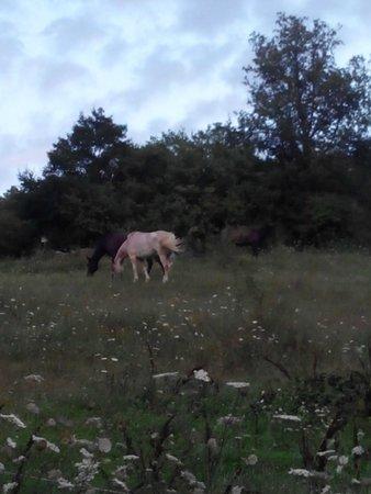 Ara Bandita Agriturismo: cavalli