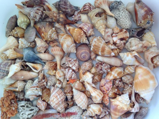 Beachview Cottages : A few sea treasures