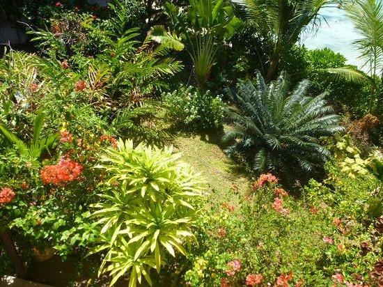 Villa Dorado : Garten