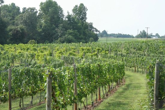 The Inn of the Patriots B & B: See and taste some of the nine different grapes grown!