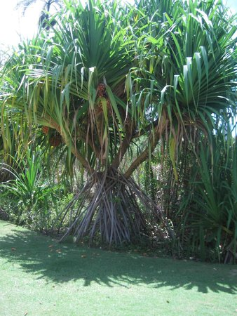 Tropical Princess Beach Resort & Spa: Végétation dans l'hôtel