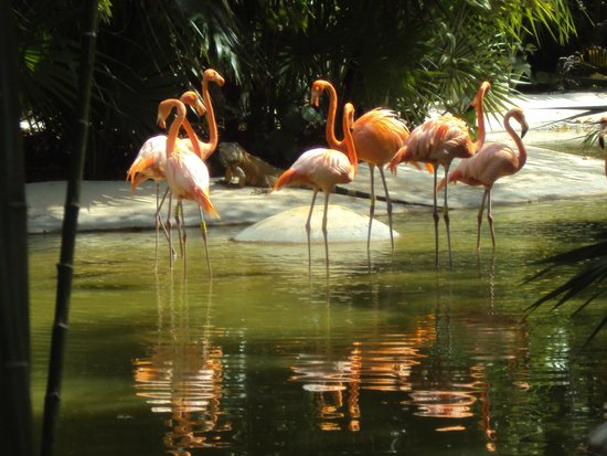 Mayan Palace at Vidanta Riviera Maya: Lindos flamingos