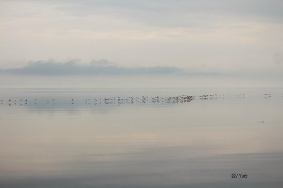 Beach Breeze Motel: flocks of shorebirds gathering in the dawn light just offshore