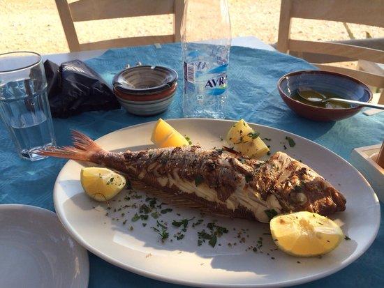 Koumpara Seafood Restaurant: Andrea, 1kg Fragolino