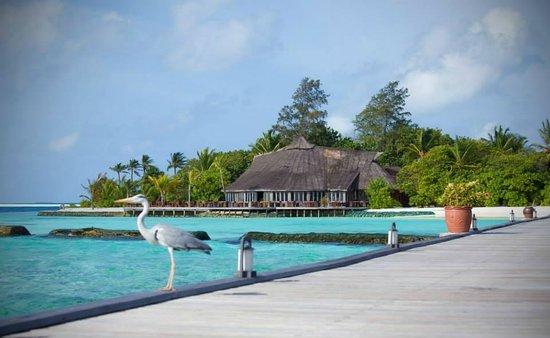 Komandoo Maldives Island Resort: Das Falhu Restaurant vom Jetty