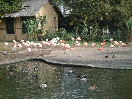 Prague Zoo : flamingo