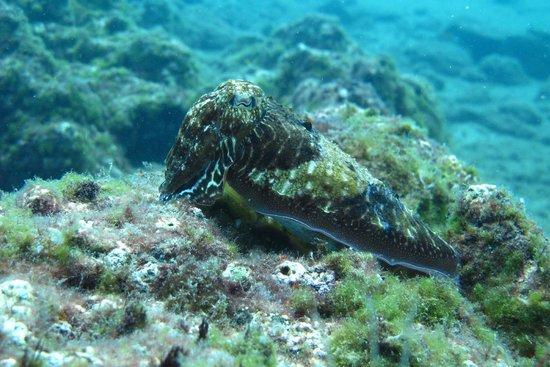 Safari Diving Lanzarote: Sepia