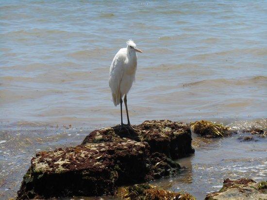 Casa Marina, A Waldorf Astoria Resort: Florida bird - Crane