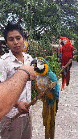 Sandos Caracol Eco Resort: Darwin linda guacamaya