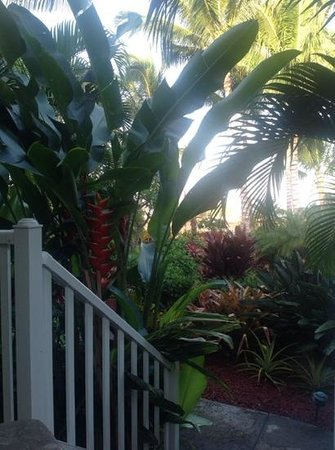 Pineapple Inn : from our lanai