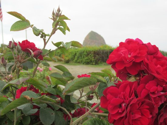 McBee Cottages: Haystack framed by roses