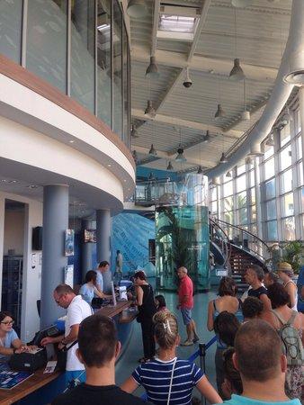 Aquarium Mare Nostrum: Entrée