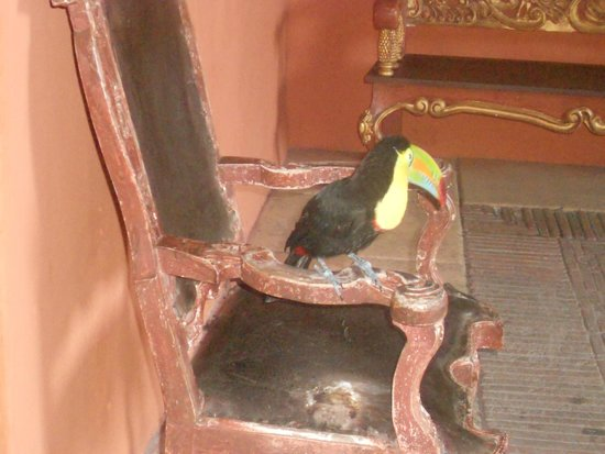 Sofitel Legend Santa Clara : O tucano Mateo no lobby