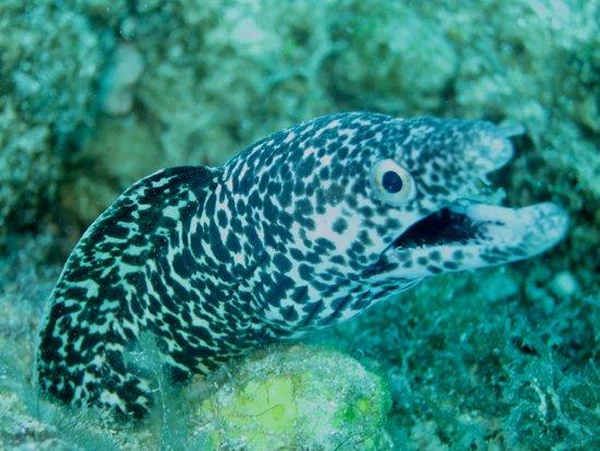 Octopus Diving : Reef Dive, St. Maarten 8/14