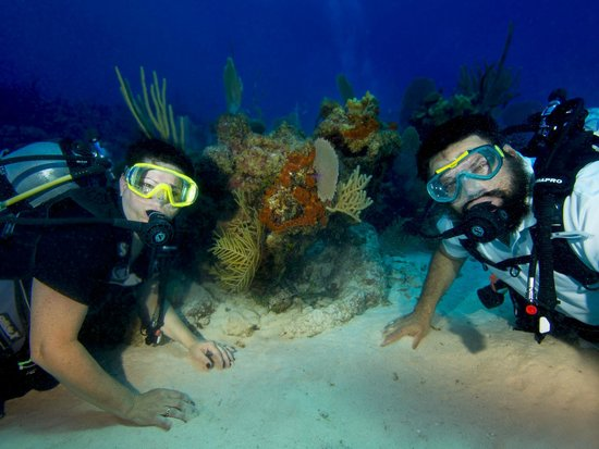 Cayman Turtle Divers: north wall