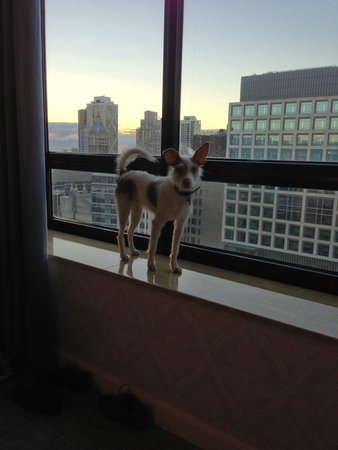 The Ritz-Carlton, Chicago : our dog enjoying the view