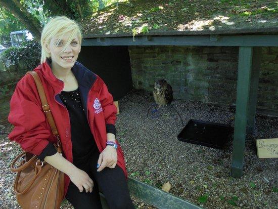 Mary Arden's Farm: One of the owls