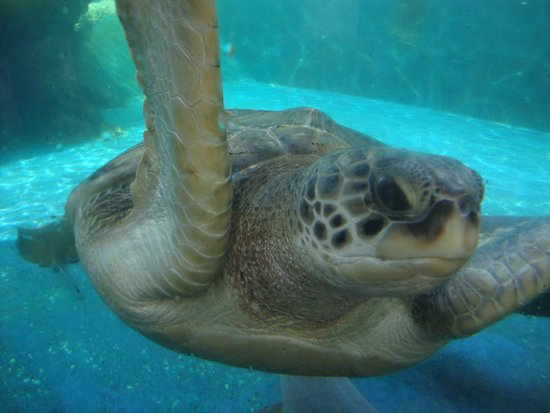 Interactive Aquarium : 3