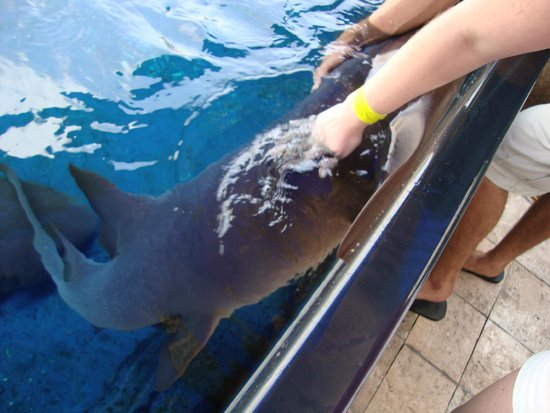 Interactive Aquarium: 4