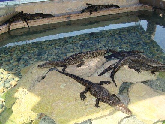 Interactive Aquarium : 11