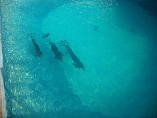 Interactive Aquarium: 8