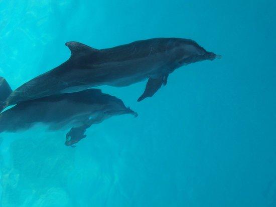 Interactive Aquarium: 1