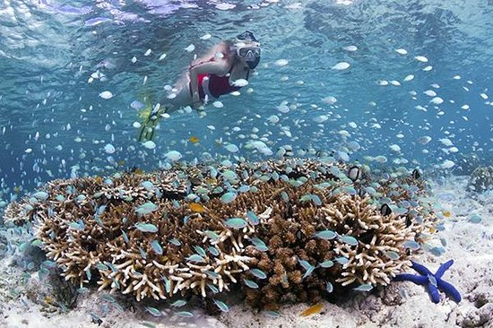Wakatobi Dive Resort: Snorkelers can swim out right off the beach to enjoy hours of enjoyment and marine life viewing.