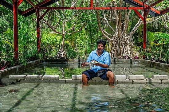 Wakatobi Dive Resort : Wakatobi's turtle nursery, with caretaker Sayafrin, a long time Wakatobi team member.