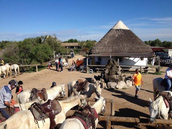 Centre Équestre les Arnelles en Camargue : Centre équestre Les Arnelles