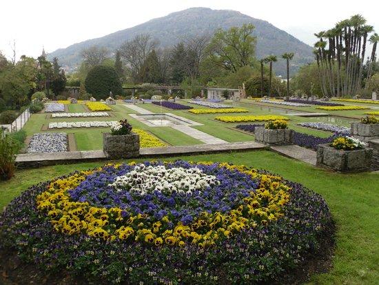 Davidia involucrata - Bild von Botanical Gardens Of Villa Taranto ...