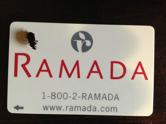 Ramada Drumheller Hotel & Suites: a beetle on the table