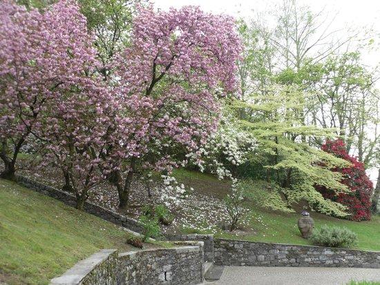 giardino terrazzato - Foto di Villa Taranto, Verbania - TripAdvisor