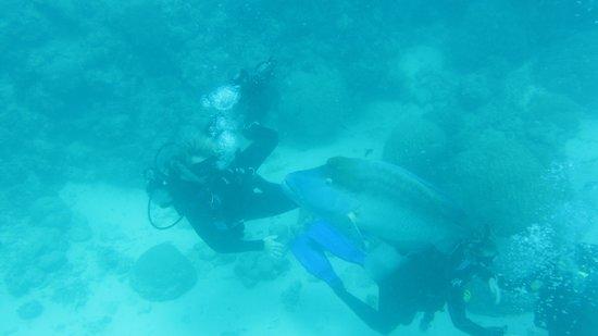 Divers Den : Groper Wally
