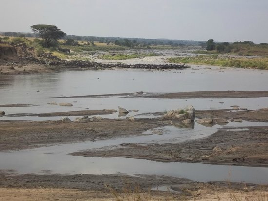 Olakira Camp, Asilia Africa: Wildebeest Crossing #7 in action