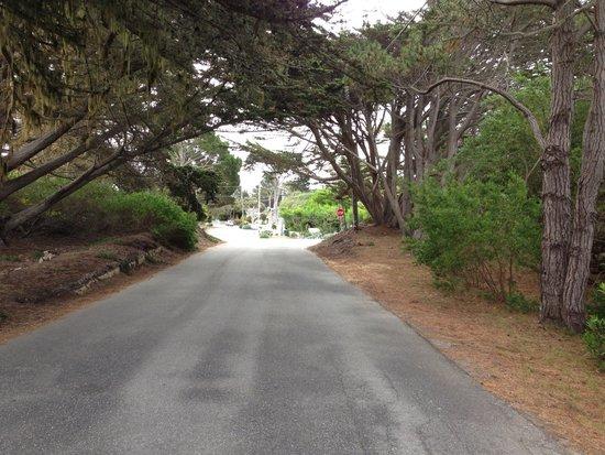 Bide-A-Wee-Inn & Cottages : Walking to ocean
