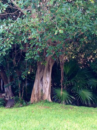 Hard Rock Hotel Riviera Maya : The grounds are beautiful