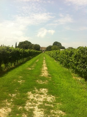 Relais Villa Sagramoso Sacchetti: The vineyard and the villa