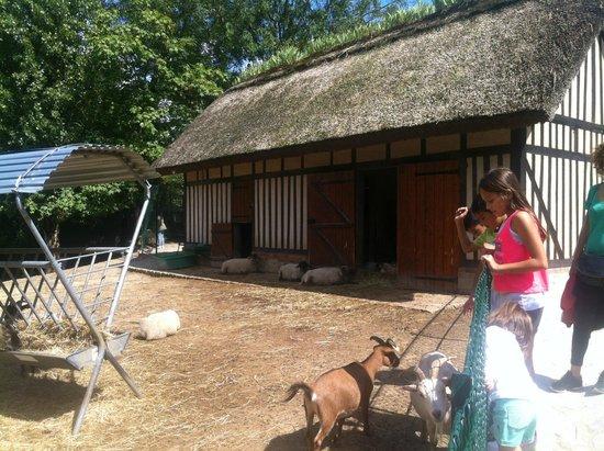 Jardin d'Acclimatation: L'enclos des moutons