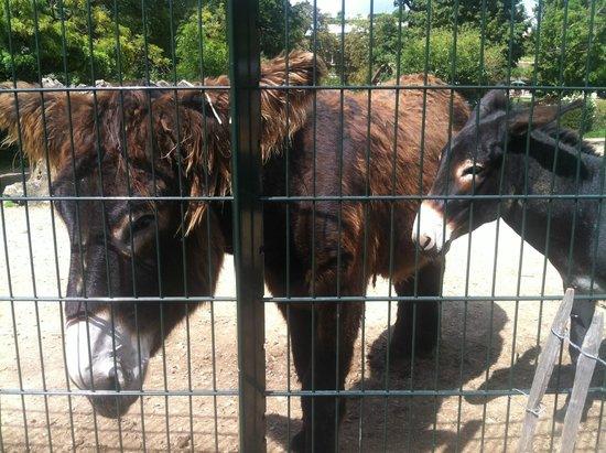 Jardin d'Acclimatation: Les ânes du Berry